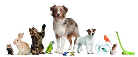 lots of pets.jpg